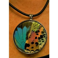 Australian Made Recycled Butterfly Wing Pendants - Ulysses/Sunset Butterfly Wing Pendants set in Pewter are designed using real Butterfly Wings which are harvested from non threatened species from around the world T. Please Click the image for more information.